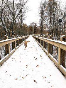 A dog on a bridge with snow