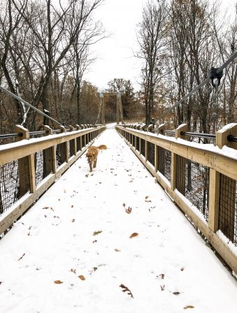 A dog on a bridge with snow