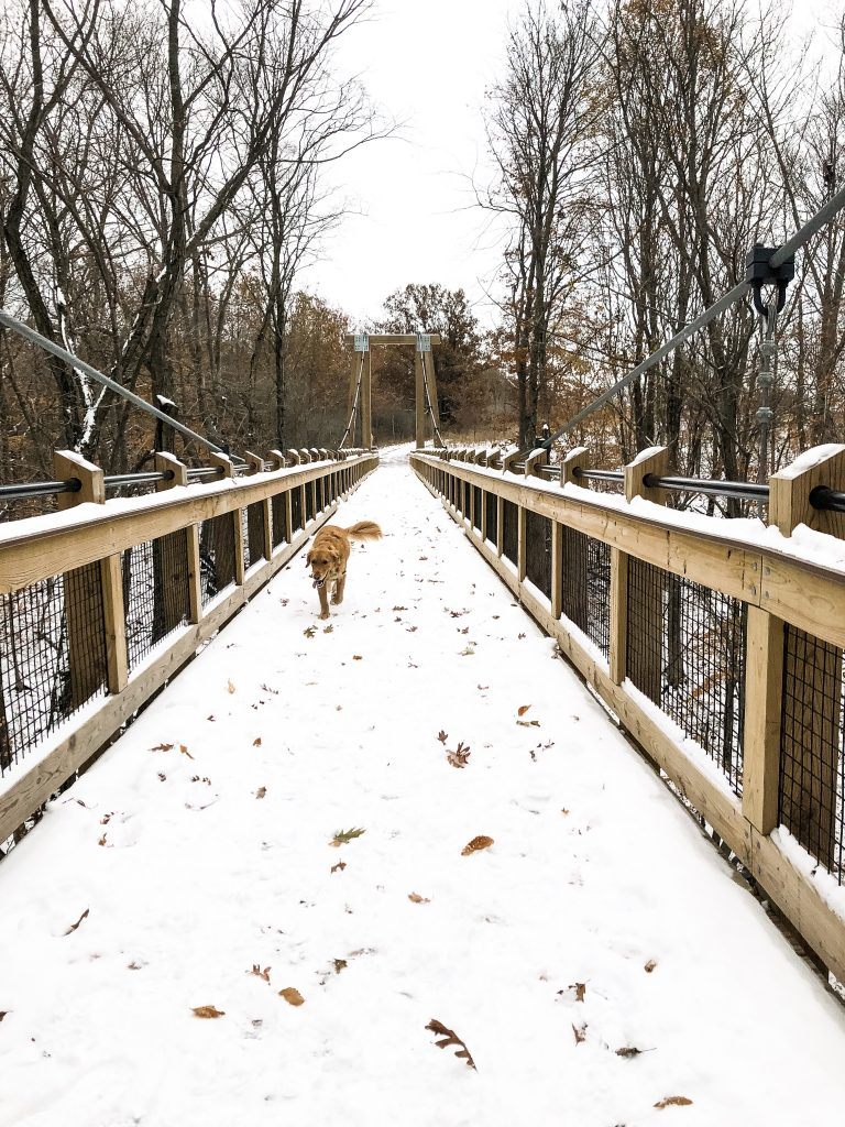 A dog on a bridge with snow.