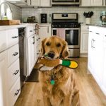 a dog in a kitchen with a toy